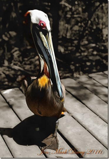 The Pelican - Key Largo
