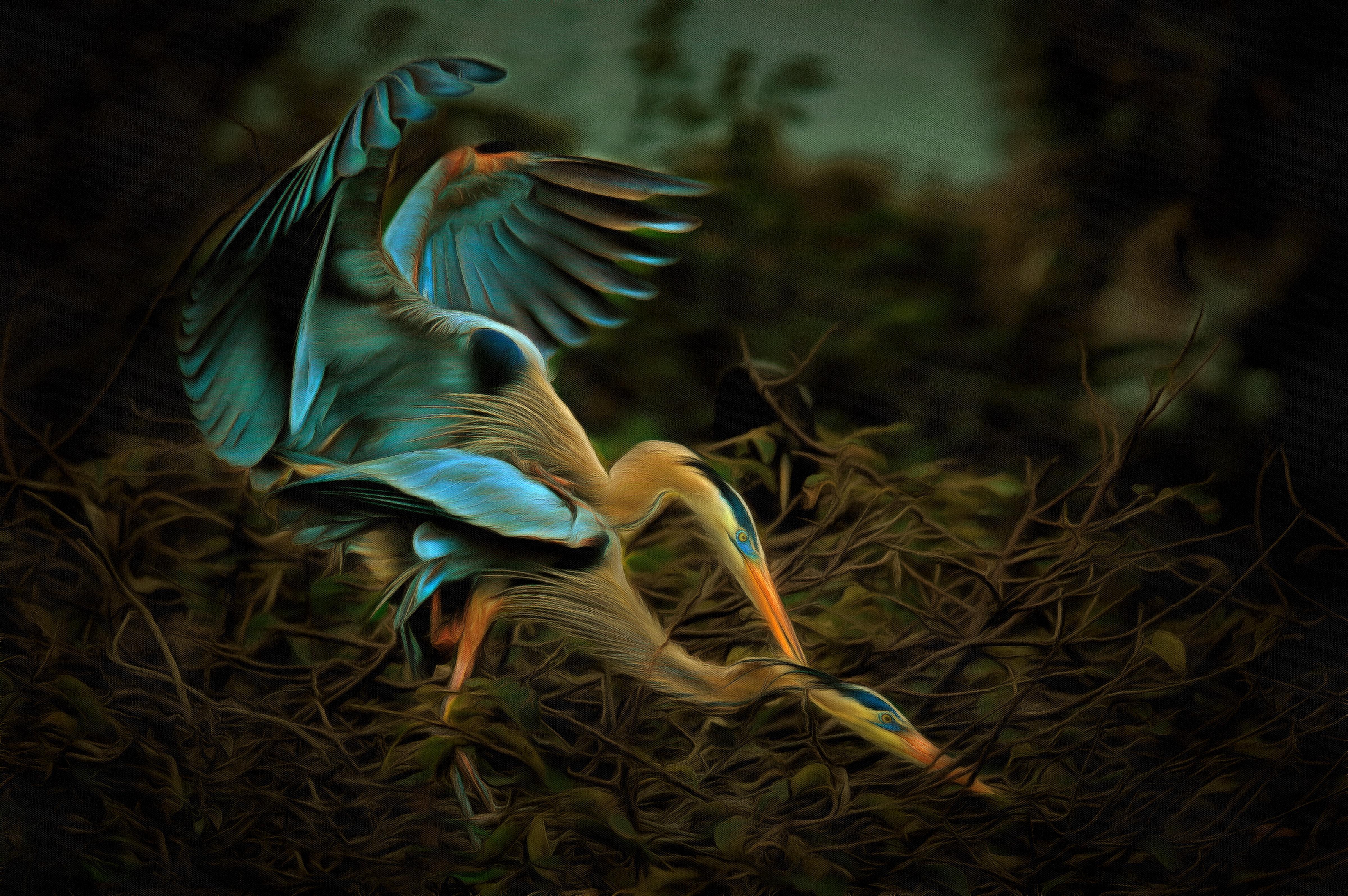 Day-4B_Heron_Love Reward for a good stick